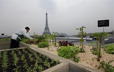 Временна градина с всякакви билки и зеленчуци беше засадена на покрив от 150 кв. м близо до Айфеловата кула в Париж. Идеята е на известния френски главен готвач Ален Пасар. СНИМКА: РОЙТЕРС