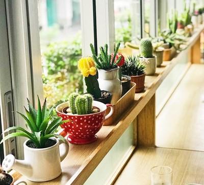 Градина: Сукулентите - за тези, които нямат време за цветя