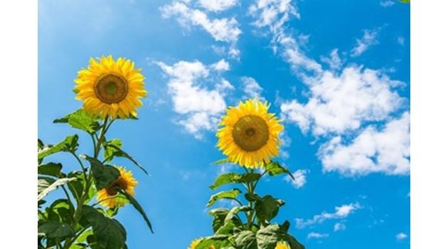 Утре ще е слънчево, следобяд на места ще вали дъжд