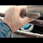 Добър човек спасява замръзнало от студ врабче