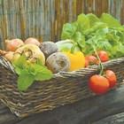 Листната храна за растенията ви осигурява отлична реколта