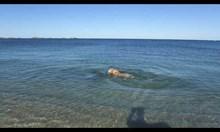 Куче си играе с делфин