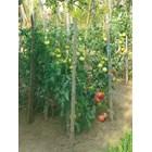 За различните фази от развитието на зеленчуците има различни листни торове
