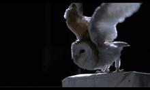 Коя е птицата с най-безшумен полет