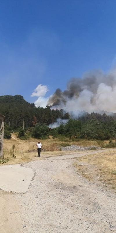 Пожарите нанесоха големи щети в Пловдивско