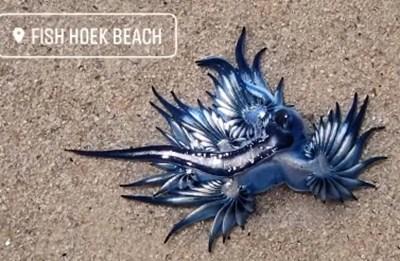 СНИМКА: Фейсбук/Fish Hoek Beach