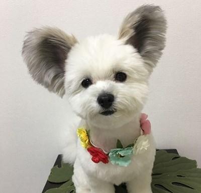 Кучето Гома СНИМКИ: Инстаграм/marupgoma_c