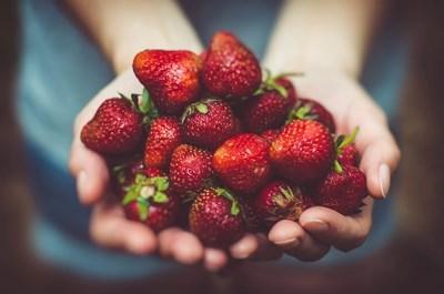 Продължава прибирането на реколтата от ягоди в Испания. Снимка: Пиксабей
