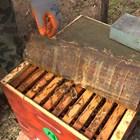 В кошерите Дадан-блат и Лежак трябва да се остави най-малко 14-18 кг мед според силата на семейството и характера на зимата в района. Снимка YouTube