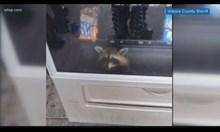 Миеща мечка заседна в автомат за чипс