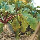 Декемврийски грижи за зеленчуците