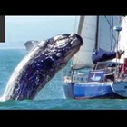 Близки срещи с китове