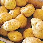 Картофите в хранилището