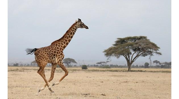 """Национален резерват """"Амбосели""""-Кения"""