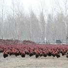 Снимка: New China TV