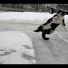 Котки и кучета върху лед