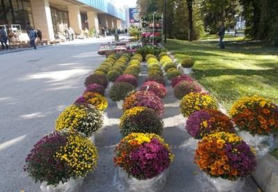 """Изобилие от цветя ще видят пловдивчани и гостите на града на """"Цветна есен"""""""