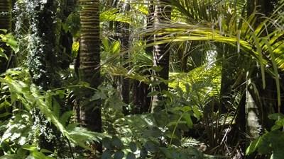 Тропическите гори могат да загубят функцията си на гигантски склад за въглероден двуокис СНИМКА: Pixabay