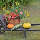 Планирайте цветна есен