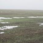 Снегът няма да застраши слабите посеви