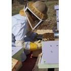 В пчелните гнезда се поставят пити с достатъчно празни правилно изградени работнически килийки. Така ще осигурите място за снасяне.
