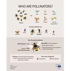 Пчелите и пеперудите са видовете, за които има най-добри данни, доказващи, че един от десет видове пчели и пеперуди е застрашен от изчезване в Европа.