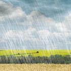 Очакваните валежи ще са нужни за посевите