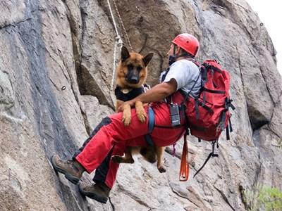 В много от акциите спасителното куче е безценен помощник.
