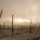 Учени предлагат в борбата срещу сушата да се използва звук