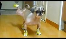 Домашни любимци с обувки