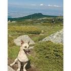 На планина с кучета