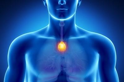 Ето къде се намира тимусната жлеза.  СНИМКИ: АРХИВ