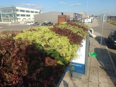 Покривите на три автобусни спирки в Бургас вече си имат градинки. От общината се надяват зеленината да помогне да пречистване на въздуха.