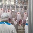 Засега Германия е водещ производител на пуешко месо в ЕС. Тя е и единствената държава в Европа с по-голям брой индустриални кланици, което също е важно.