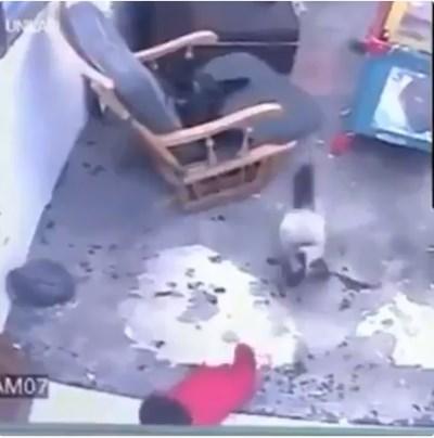 Кадър от видеото: Туитър/ Viral Videos