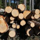 Пипнаха четири каруци с незаконни дърва край Павликени