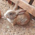 Грижи за отбитите зайчета