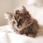 На каква възраст е котката