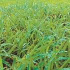 Внесен в почвата гел ще се бори със сушата