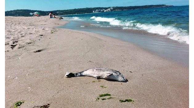 Война под флага на делфина