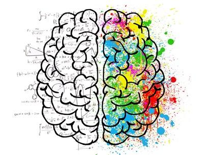 Областта на мозъка, свързана с математика, е различна от тази, която отговаря за езика. СНИМКА: Pixabay