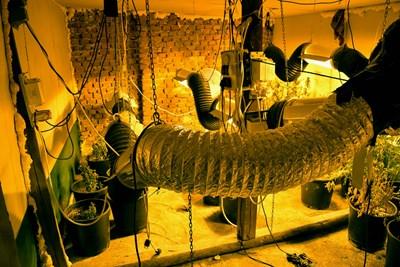 Таванска наркооранжерия разкриха в Козлодуй