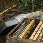 Всеки пчелар трябва да помисли за третиране на пчелите срещу най-значимите и често срещани заболявания – вароатоза и нозематоза.