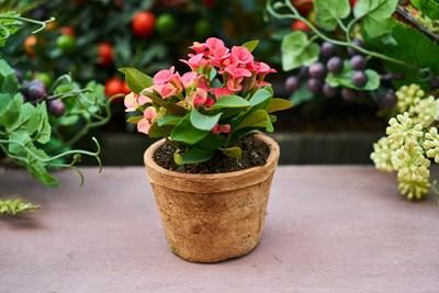 Градина: Какво е нужно на стайните растения на прага на пролетта