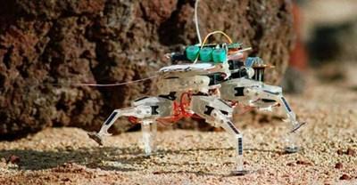 Гущер-робот Снимка: НАСА