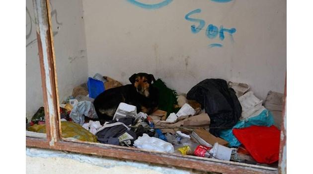 Настаняват в интернат момчето, убило бездомник във Варна