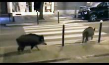 Диви животни превземат улиците по цял свят