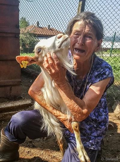 Баба Тодора е на 68 г. от с. Шарково. Има кози, гледа и агнета. Всички нейни животни трябва да бъдат евтаназирани.