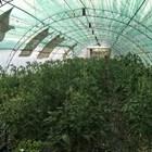 От 150 до 2000 лв./ха ще е помощта по de minimis при плодове, зеленчуци и маслодайна роза