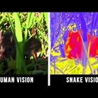 Как виждат различните животни